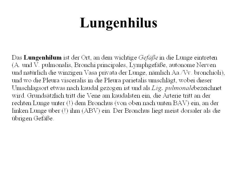 Lungenhilus