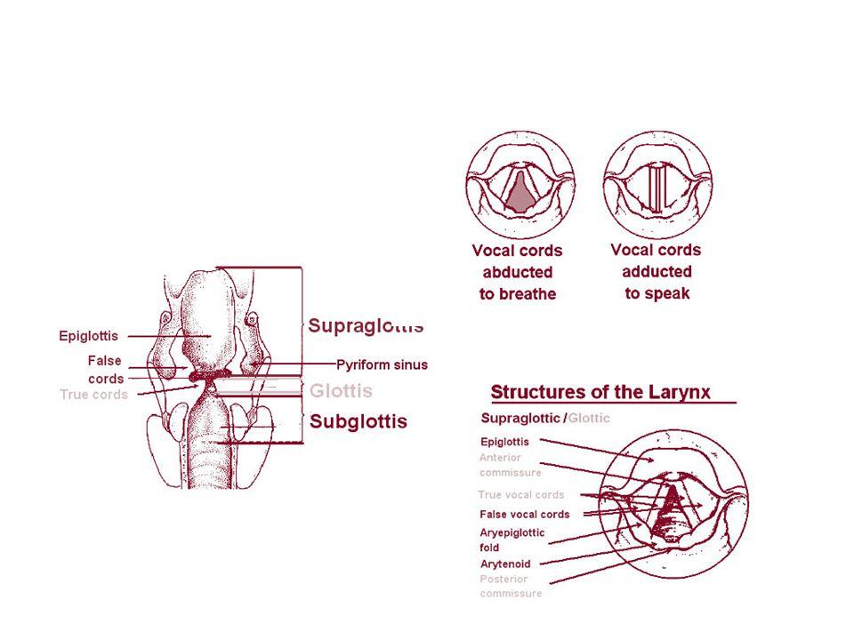 Vereinfachter Frontalschnitt durch die beiden Pleurahöhlen mit Lungen.