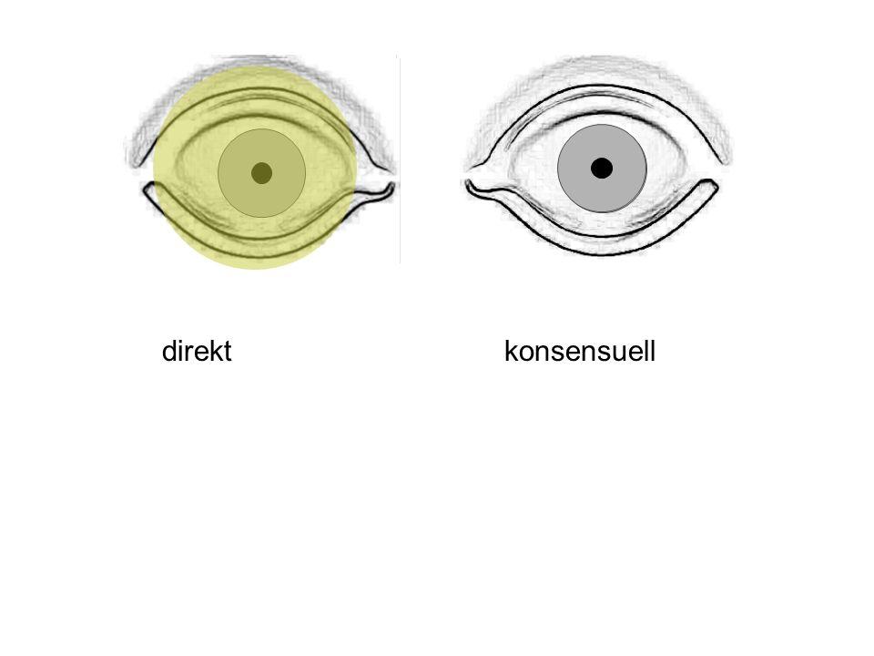 direktkonsensuell Das wäre ein Normalbefund: Pupillen gleich weit (= isokor) reagieren seitengleich auf Licht.