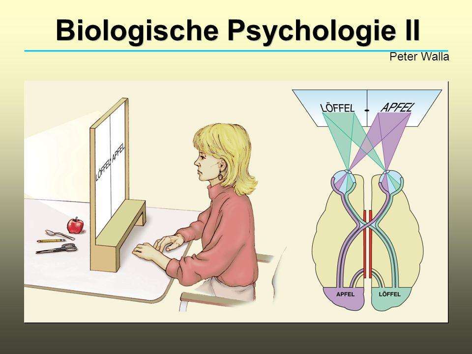 Biologische Psychologie II Peter Walla