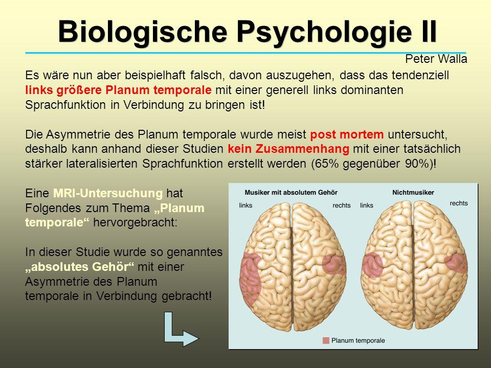 Biologische Psychologie II Peter Walla Es wäre nun aber beispielhaft falsch, davon auszugehen, dass das tendenziell links größere Planum temporale mit einer generell links dominanten Sprachfunktion in Verbindung zu bringen ist.