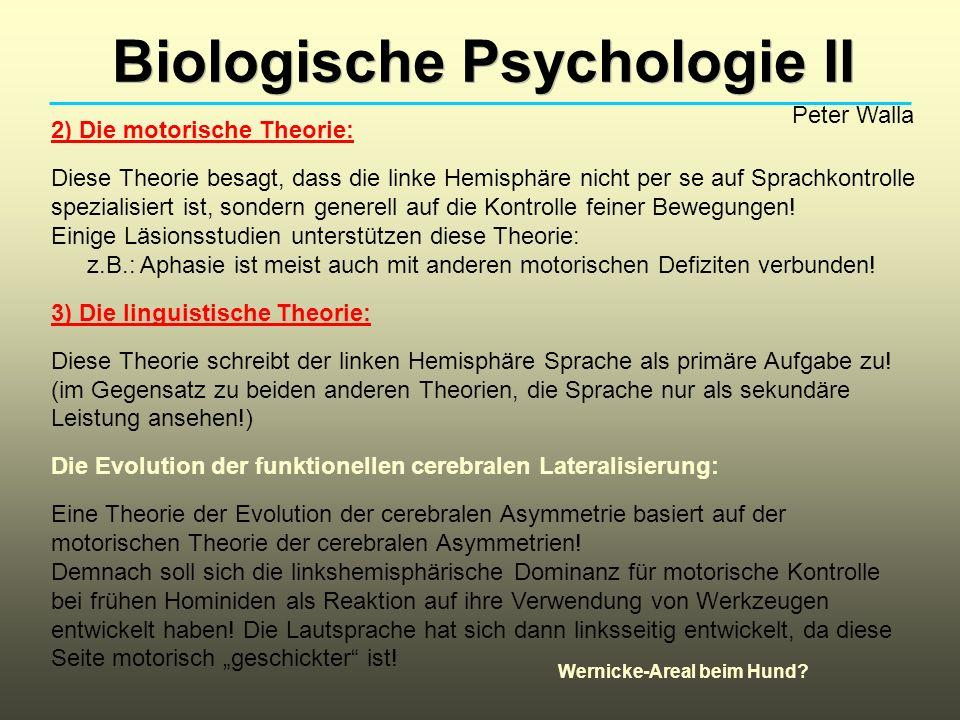 Biologische Psychologie II Peter Walla 2) Die motorische Theorie: Diese Theorie besagt, dass die linke Hemisphäre nicht per se auf Sprachkontrolle spezialisiert ist, sondern generell auf die Kontrolle feiner Bewegungen.