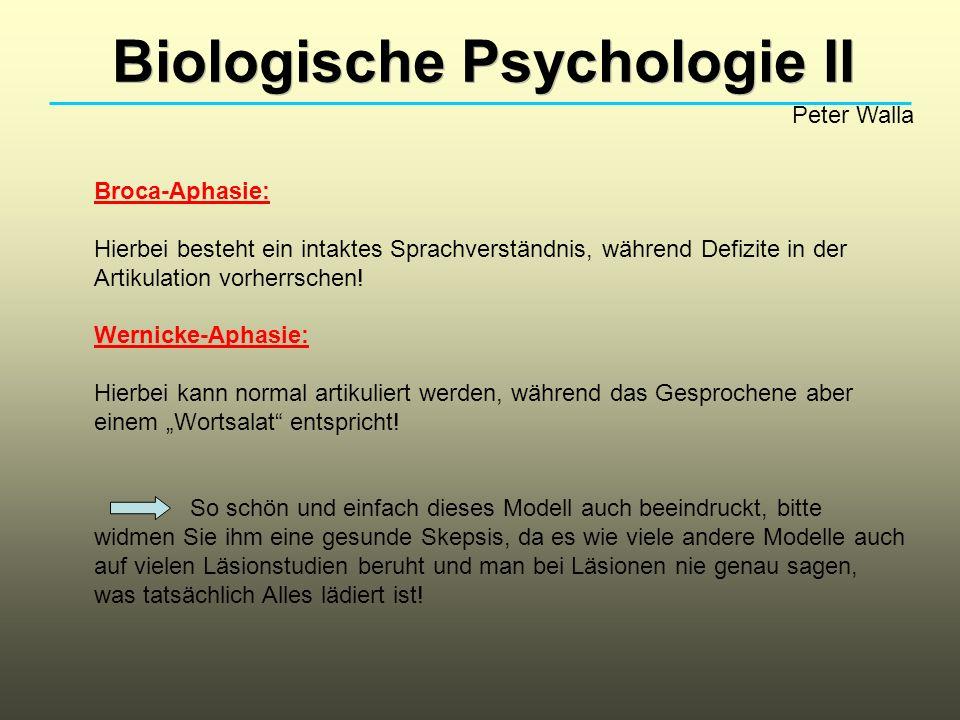Biologische Psychologie II Peter Walla Broca-Aphasie: Hierbei besteht ein intaktes Sprachverständnis, während Defizite in der Artikulation vorherrsche
