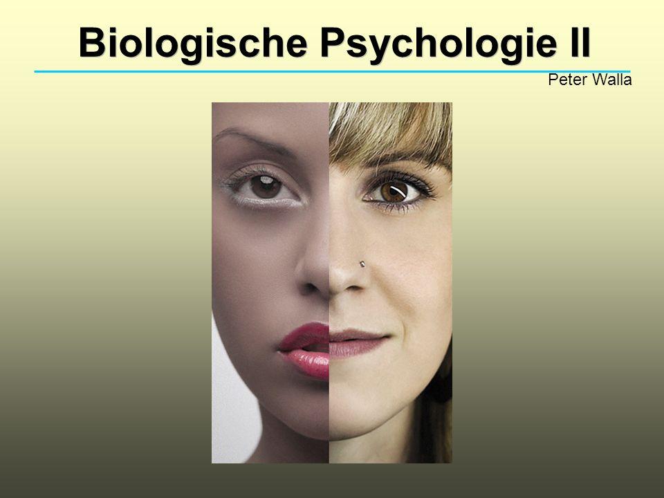 Biologische Psychologie II Peter Walla Bei der vorher erwähnten Untersuchung (Apfel und Löffel!) durfte ein visueller Reiz nur für 0.1s gezeigt werden, da durch auftretende Augenbewegungen sonst nicht mehr davon auszugehen ist, dass der entsprechende Reiz tatsächlich nur in einer Hemisphäre verarbeitet wird.