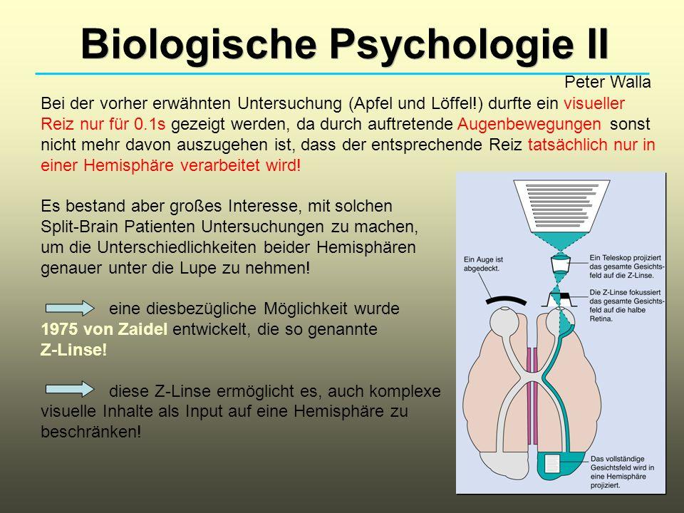 Biologische Psychologie II Peter Walla Nach vielen Untersuchungen stellte sich beispielsweise heraus, dass bei den meisten Split-Brain Patienten die rechte Hemisphäre keinen starken eigenen Willen zu haben scheint.