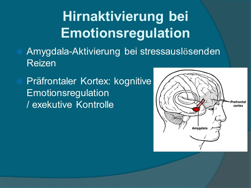 Amygdala-Aktivierung bei stressausl ӧ senden Reizen Präfrontaler Kortex: kognitive Emotionsregulation / exekutive Kontrolle Hirnaktivierung bei Emotionsregulation