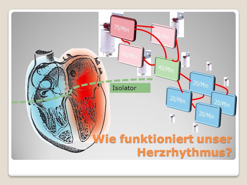 Wie funktioniert unser Herzrhythmus? Isolator