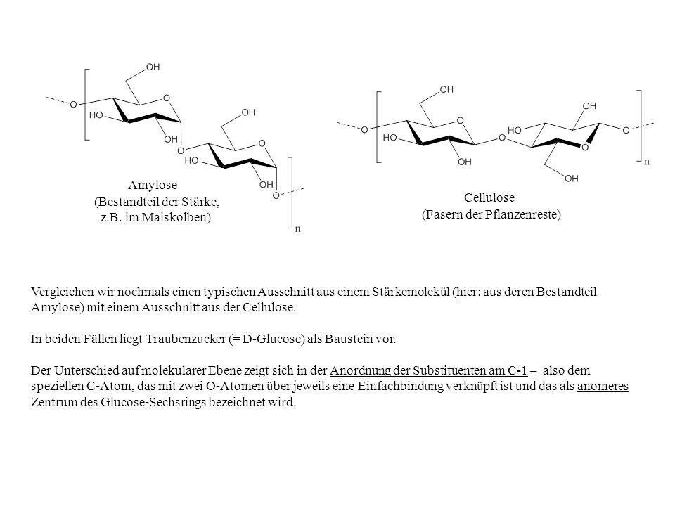 Amylose (Bestandteil der Stärke, z.B. im Maiskolben) Cellulose (Fasern der Pflanzenreste) Vergleichen wir nochmals einen typischen Ausschnitt aus eine