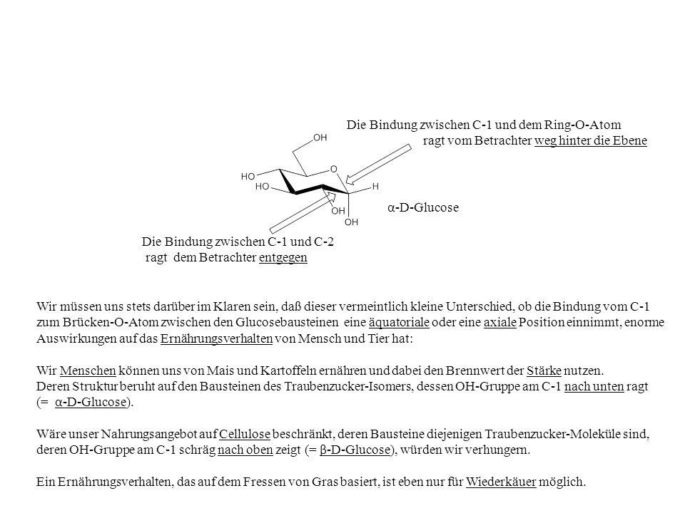 Wir müssen uns stets darüber im Klaren sein, daß dieser vermeintlich kleine Unterschied, ob die Bindung vom C-1 zum Brücken-O-Atom zwischen den Glucos