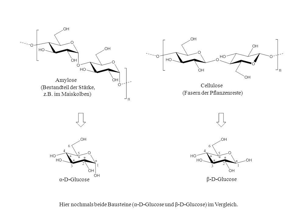 Amylose (Bestandteil der Stärke, z.B. im Maiskolben) Cellulose (Fasern der Pflanzenreste) α-D-Glucose β-D-Glucose Hier nochmals beide Bausteine ( α -D