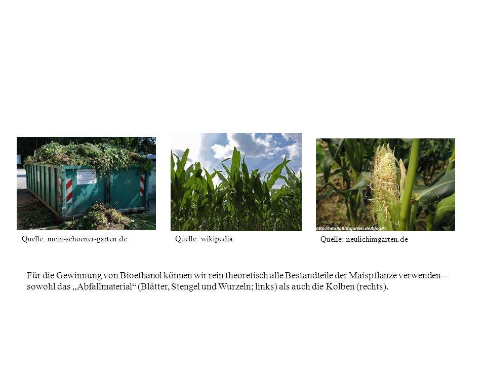 Quelle: mein-schoener-garten.deQuelle: wikipedia Quelle: neulichimgarten.de Für die Gewinnung von Bioethanol können wir rein theoretisch alle Bestandt