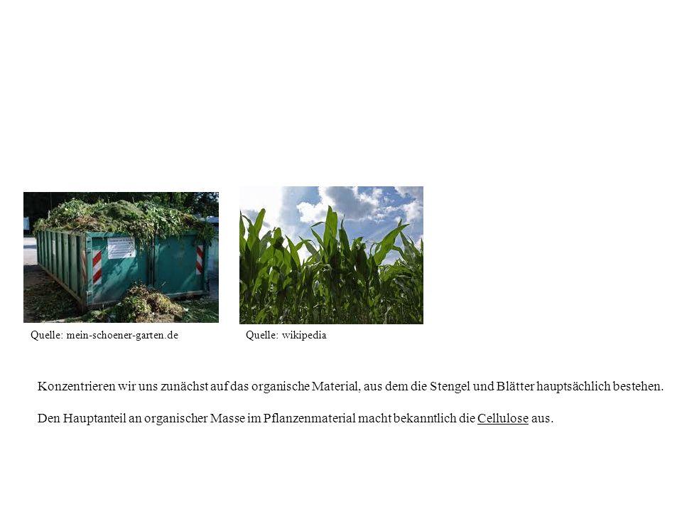 Quelle: mein-schoener-garten.deQuelle: wikipedia Konzentrieren wir uns zunächst auf das organische Material, aus dem die Stengel und Blätter hauptsäch