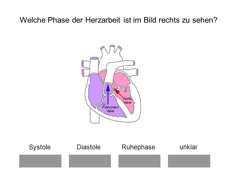 Systole Diastole Ruhephase unklar Welche Phase der Herzarbeit ist im Bild rechts zu sehen?