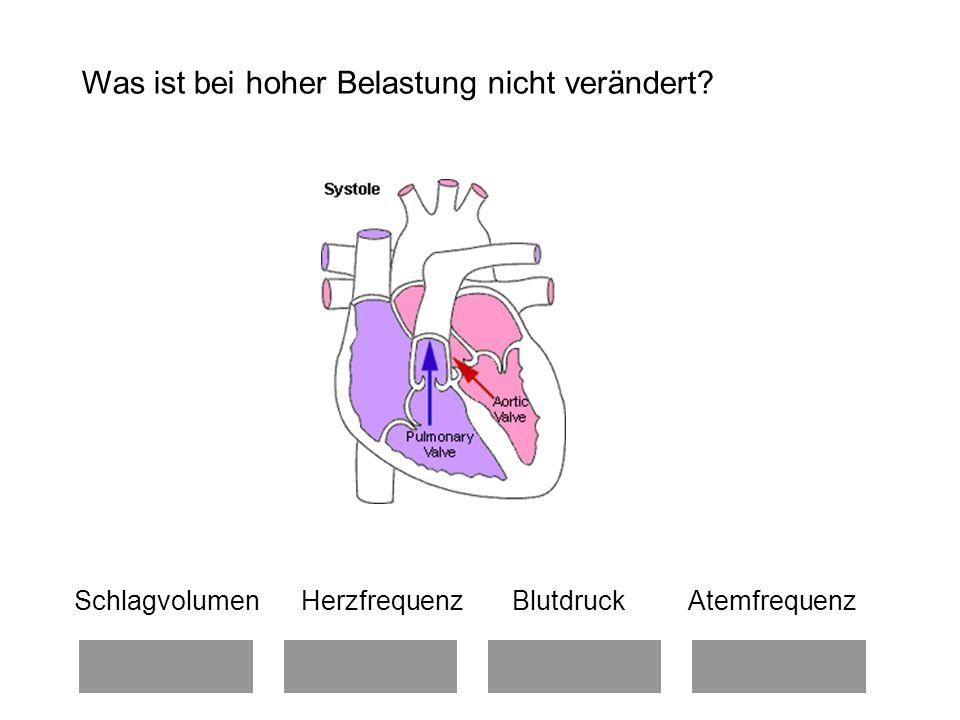 Schlagvolumen Herzfrequenz Blutdruck Atemfrequenz Was ist bei hoher Belastung nicht verändert?