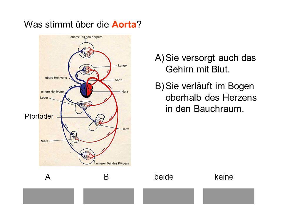 Was stimmt über die Aorta.A B beide keine A)Sie versorgt auch das Gehirn mit Blut.
