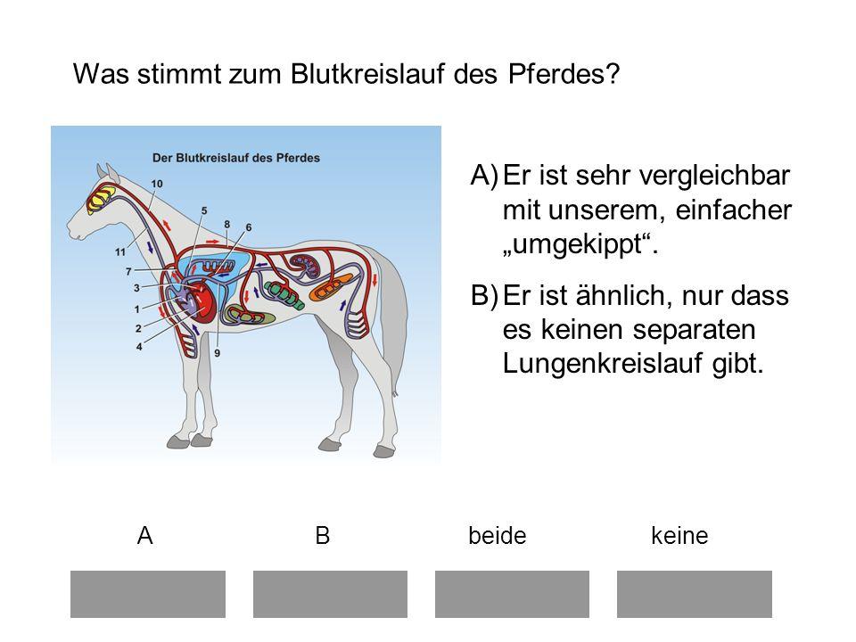Was stimmt zum Blutkreislauf des Pferdes.