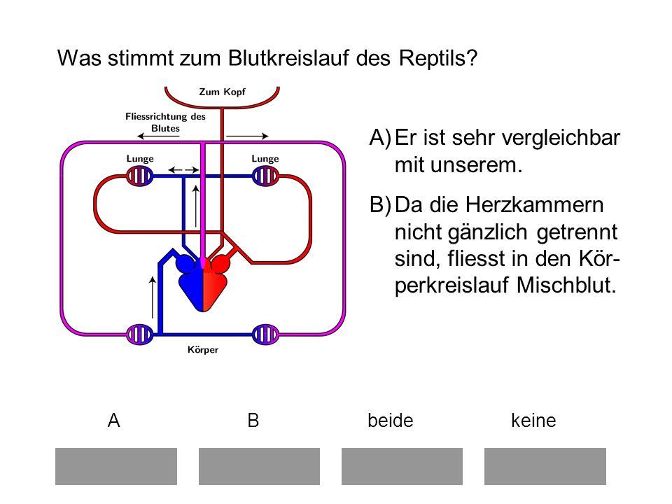 Was stimmt zum Blutkreislauf des Reptils.A)Er ist sehr vergleichbar mit unserem.