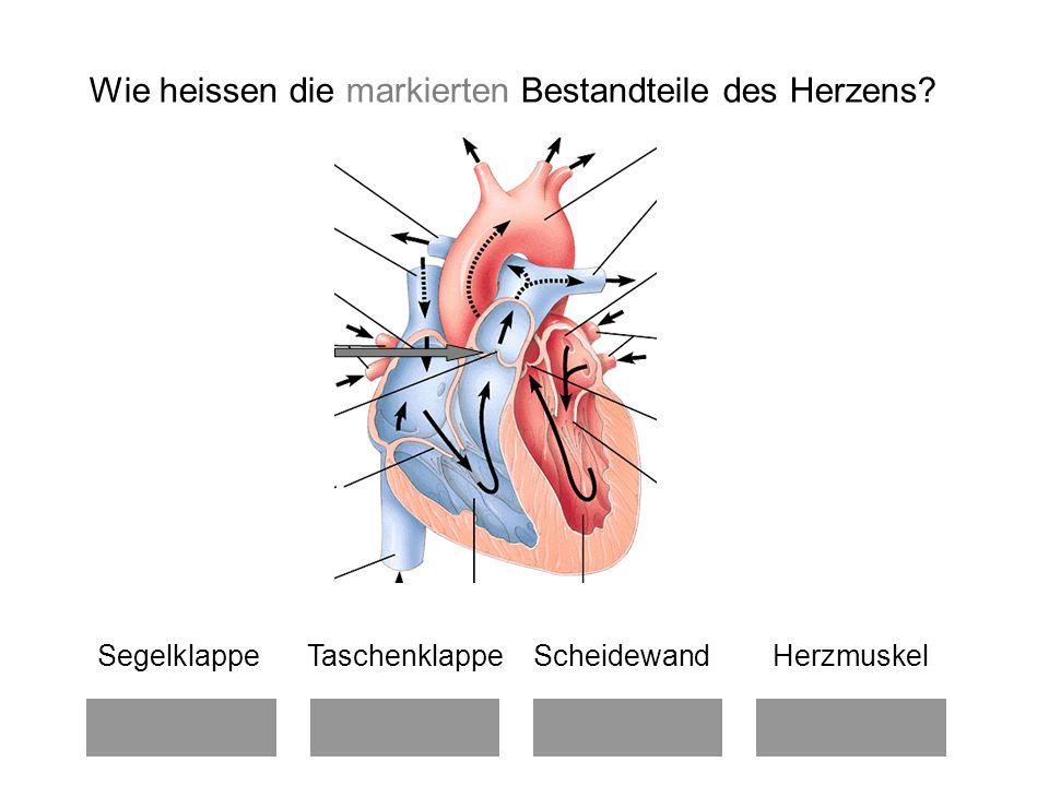 Wie heissen die markierten Bestandteile des Herzens.