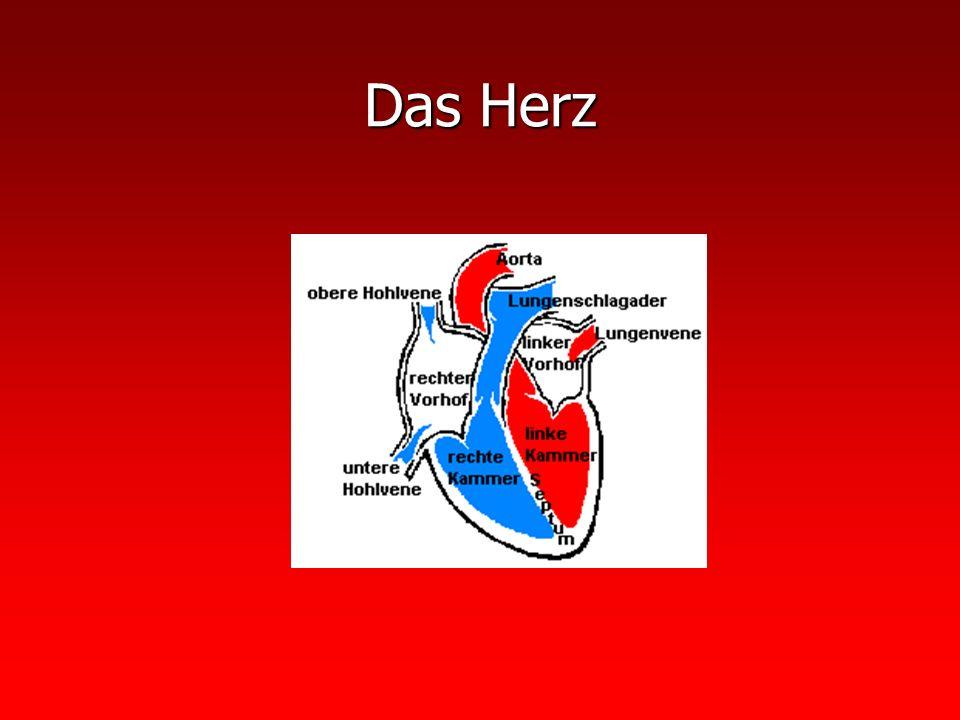 Fluss durch das Herz: Fluss durch das Herz: Venöses Blut in den linken Vorhof Venöses Blut in den linken Vorhof Linke Herzkammer Linke Herzkammer Lungenvene Lungenvene Lunge Lunge Rechter Vorhof Rechter Vorhof Rechte Herzkammer Rechte Herzkammer Aorta Aorta