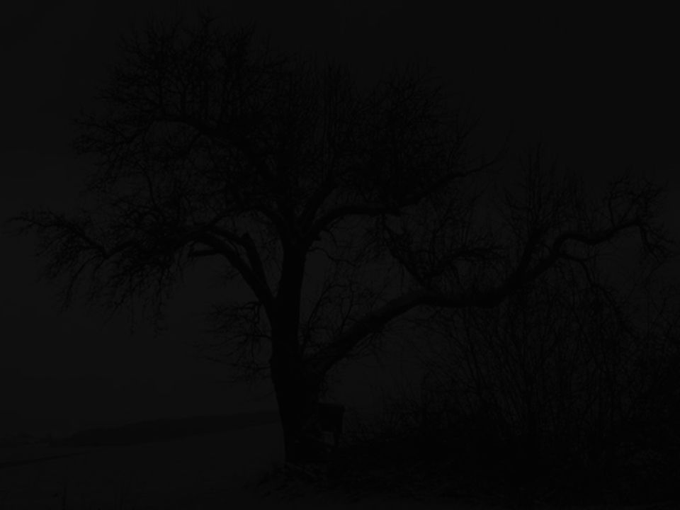 Der Apfelbaum The Appletree von / by Dottore El Cidre Copyright by PowerPointZauber 01.04.2007