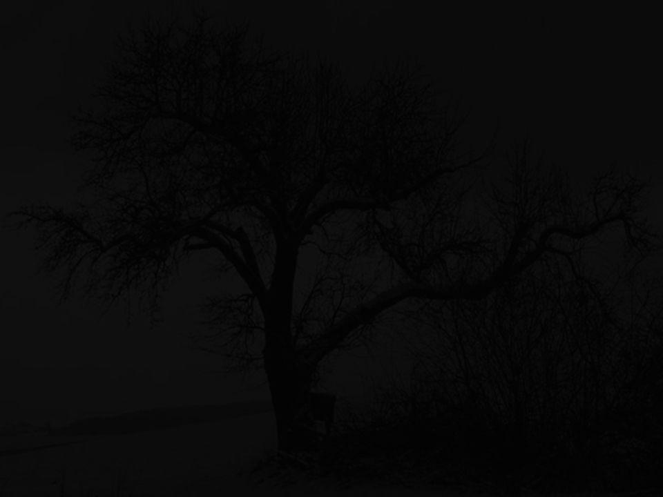 Der erste Sohn begann und sagte: Der Baum war kahl, verdreht und verkrüppelt.