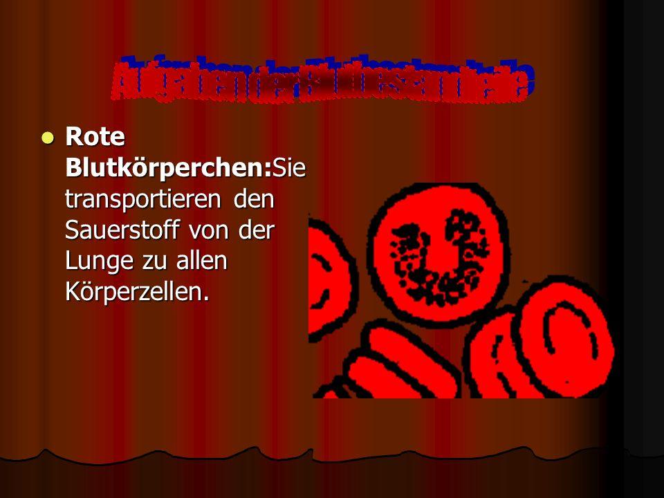 Seine rote Farbe verdankt das Blut dem Hämoglobin, einem eisenhaltigen Protein, das in den roten Blutkörperchen vorkommt. Hämoglobin bindet Sauerstoff