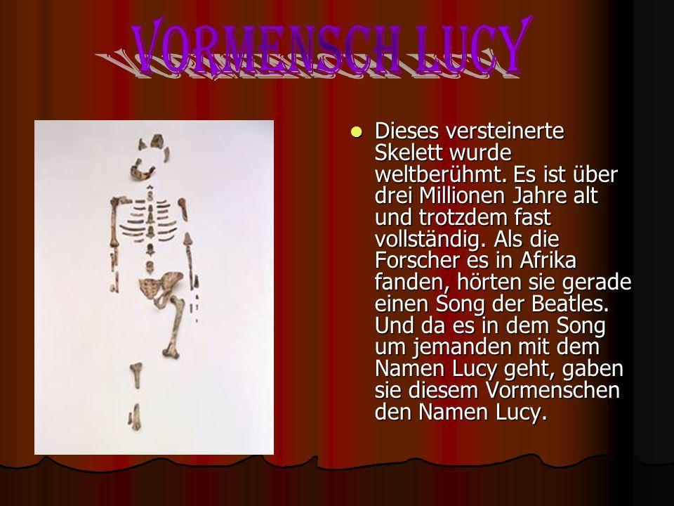 Forscher fanden in Afrika diese versteinerten Knochen von Vormenschen. Man erkennt die Knochen an ihrer hellen Farbe. Das Dunkle ist Kunststoff, aus d