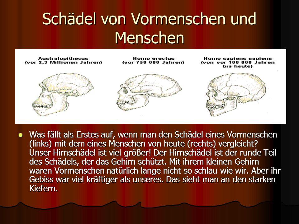 Die ersten Menschen Ungefähr so haben die ersten Menschen ausgesehen, die Nachfahren der Vormenschen. Sie aßen Fleisch, das sie mit einfachen Steinwer