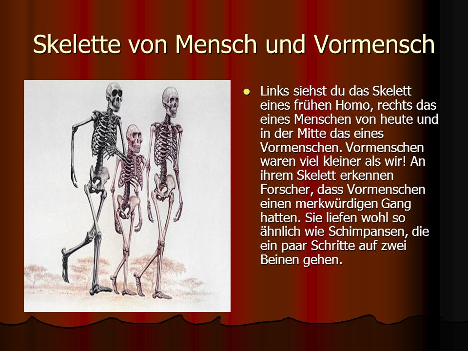 Schädel von Vormenschen und Menschen Was fällt als Erstes auf, wenn man den Schädel eines Vormenschen (links) mit dem eines Menschen von heute (rechts