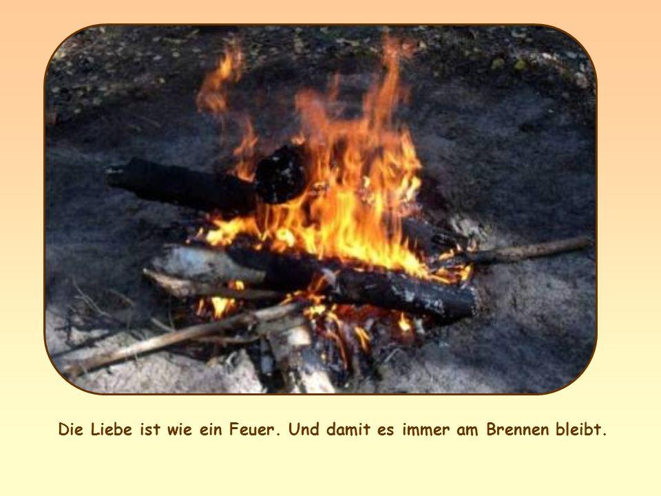 Ich bin gekommen, um Feuer auf die Erde zu werfen. Wie froh wäre ich, es würde schon brennen!