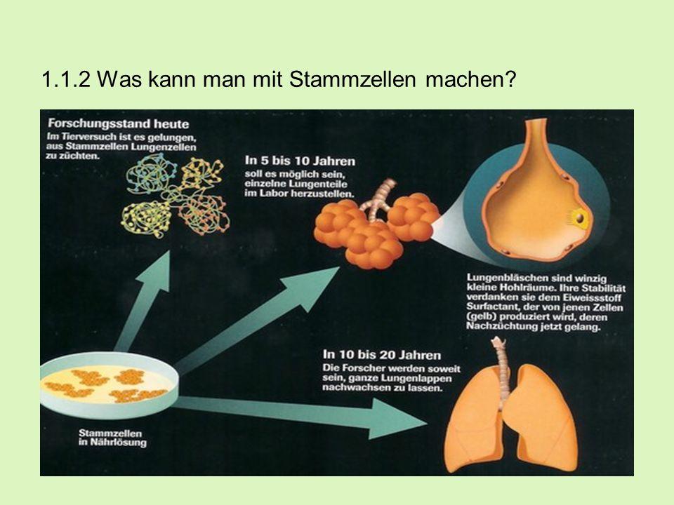 1.1.2 Was kann man mit Stammzellen machen? -Durch die Zuführung gesunder Stammzellen soll geschädigtes Körpergewebe bei Patienten regeneriert und gehe