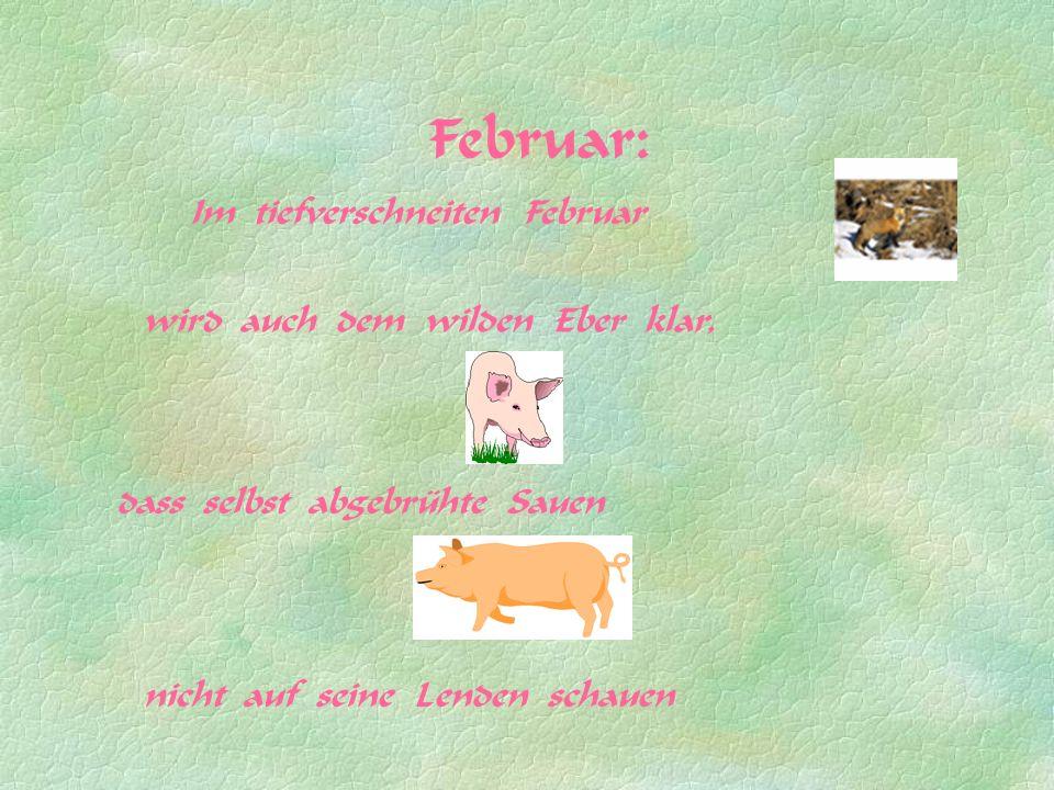 Februar: Im tiefverschneiten Februar dass selbst abgebrühte Sauen wird auch dem wilden Eber klar, nicht auf seine Lenden schauen