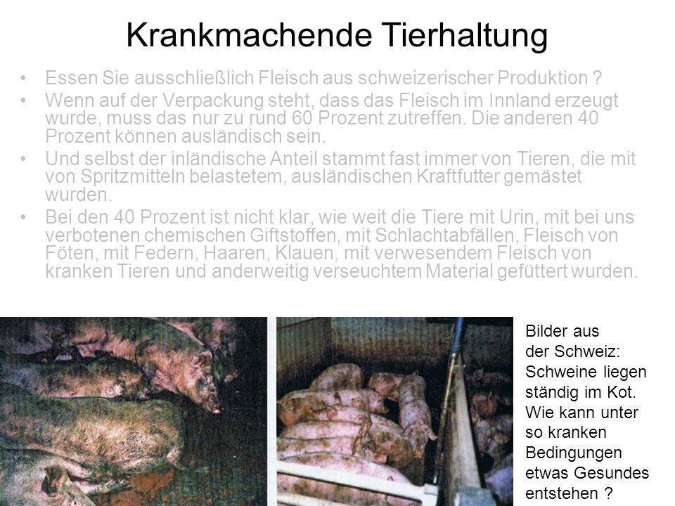 Krankmachende Tierhaltung Essen Sie ausschließlich Fleisch aus schweizerischer Produktion ? Wenn auf der Verpackung steht, dass das Fleisch im Innland