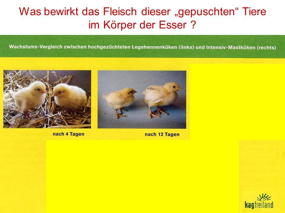 Medikamente in der Landwirtschaft Als ich ein Buch über die schweizerische Landwirtschaft verfasste, habe ich mit dem Fleischkonsum aufgehört.