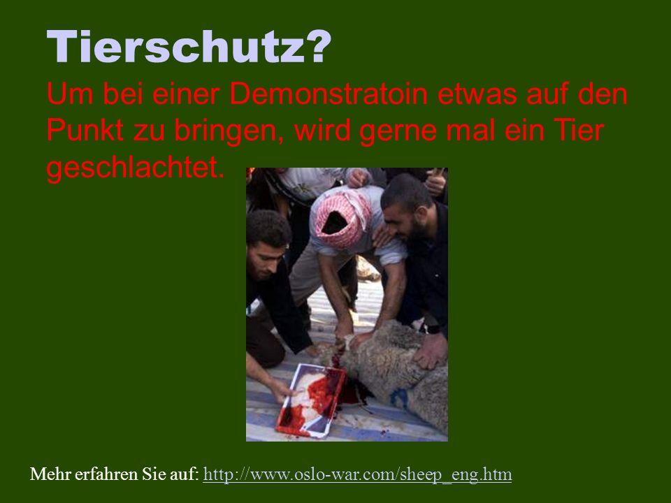 Tierschutz? Um bei einer Demonstratoin etwas auf den Punkt zu bringen, wird gerne mal ein Tier geschlachtet. Mehr erfahren Sie auf: http://www.oslo-wa