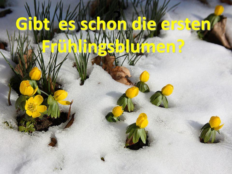 ? Gibt es schon die ersten Frühlingsblumen?
