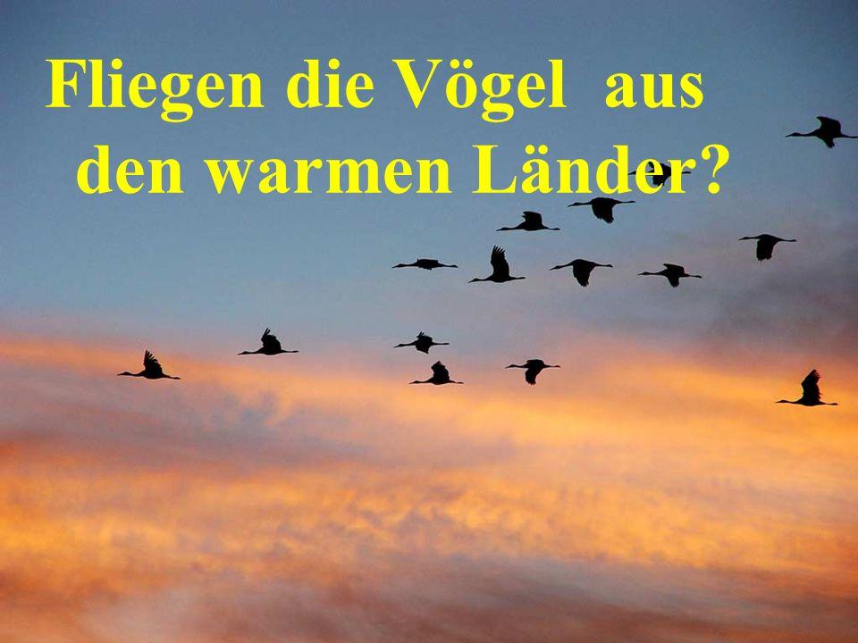Fliegen die Vögel aus den warmen Länder?