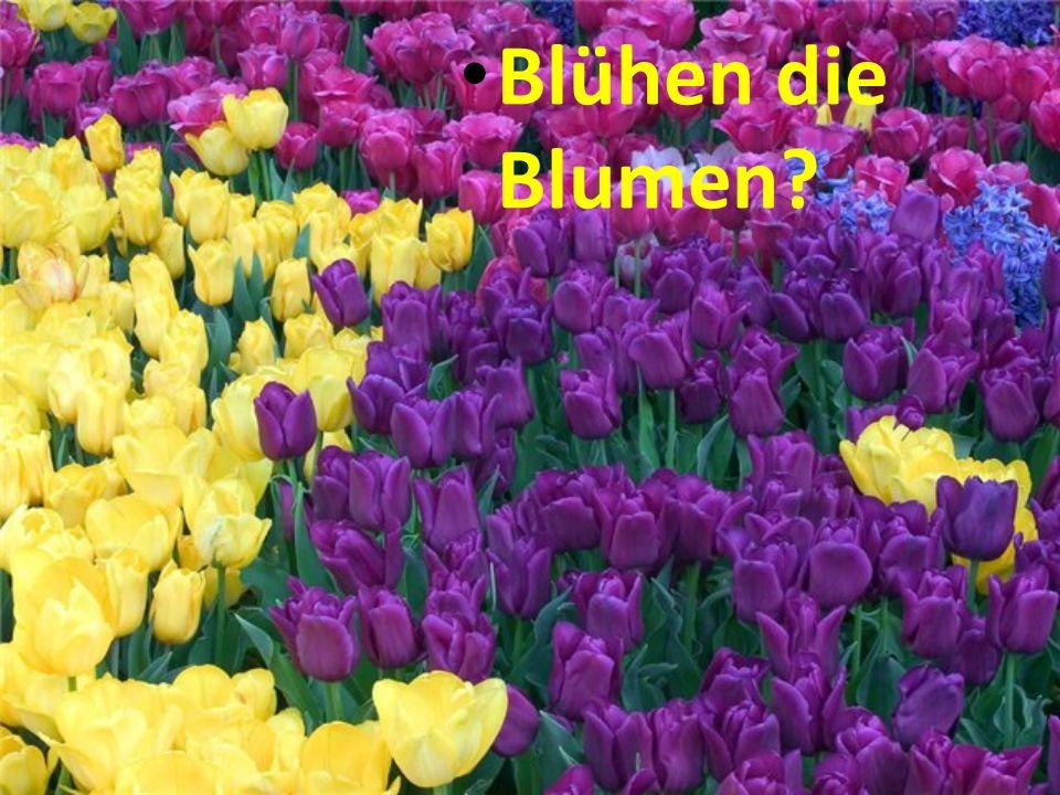 Blühen die Blumen?
