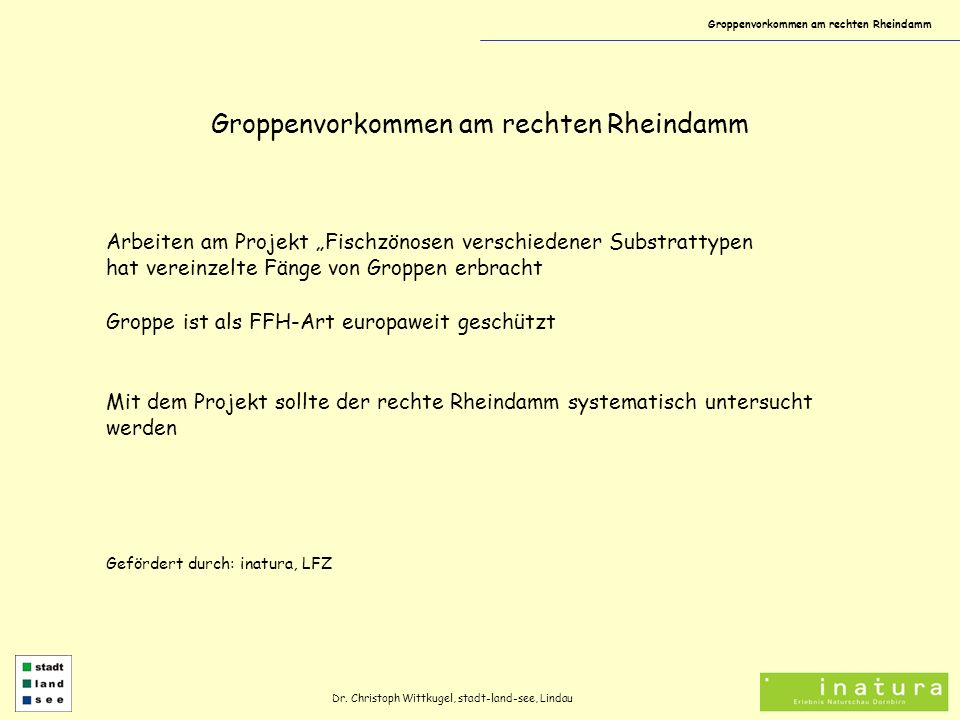 Groppenvorkommen am rechten Rheindamm Arbeiten am Projekt Fischzönosen verschiedener Substrattypen hat vereinzelte Fänge von Groppen erbracht Groppe i
