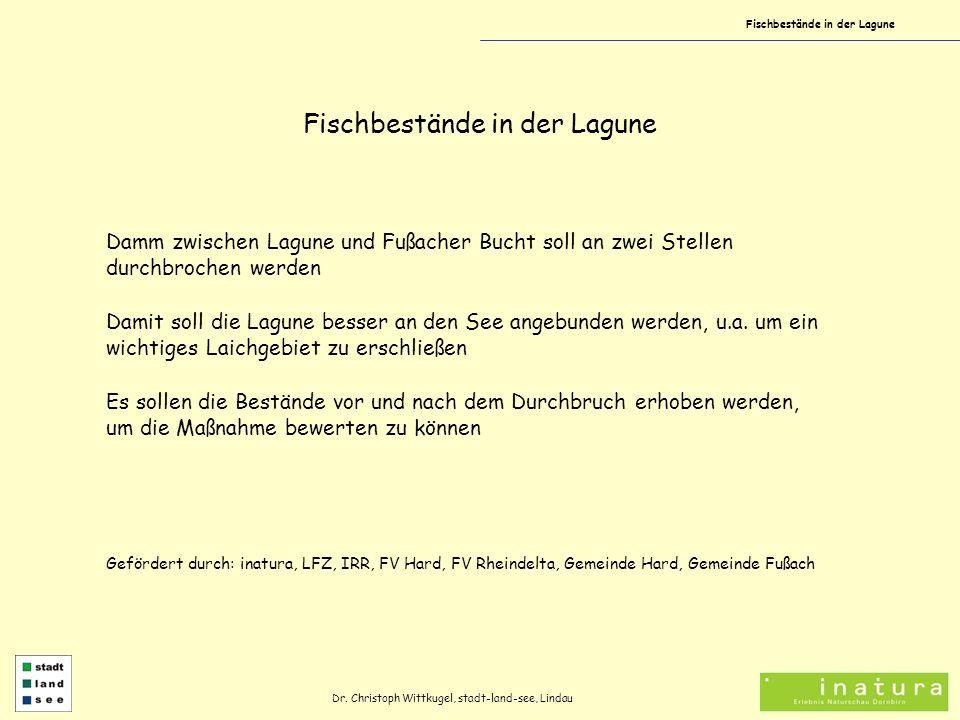 Fischbestände in der Lagune Dr. Christoph Wittkugel, stadt-land-see, Lindau Damm zwischen Lagune und Fußacher Bucht soll an zwei Stellen durchbrochen