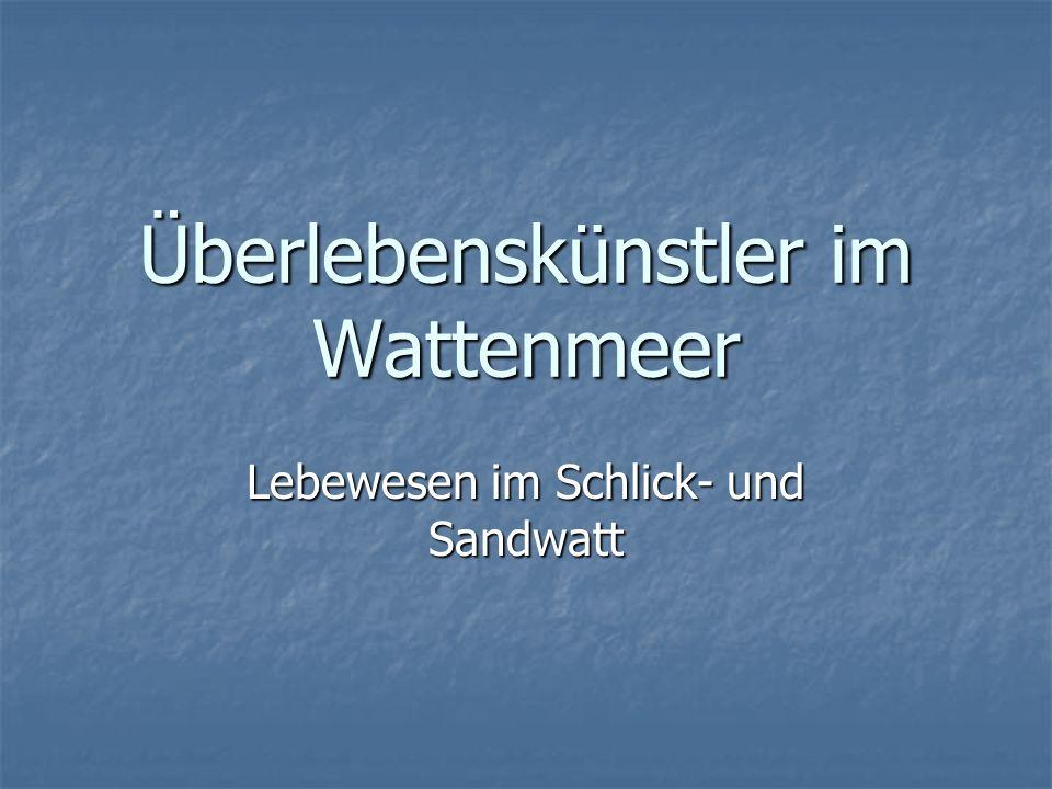 - Inhalt - Lebensraum Wattenmeer Lebensraum Wattenmeer Lebewesen im Watt Lebewesen im Watt Übersicht der Wattenmeergesellschaft Übersicht der Wattenmeergesellschaft