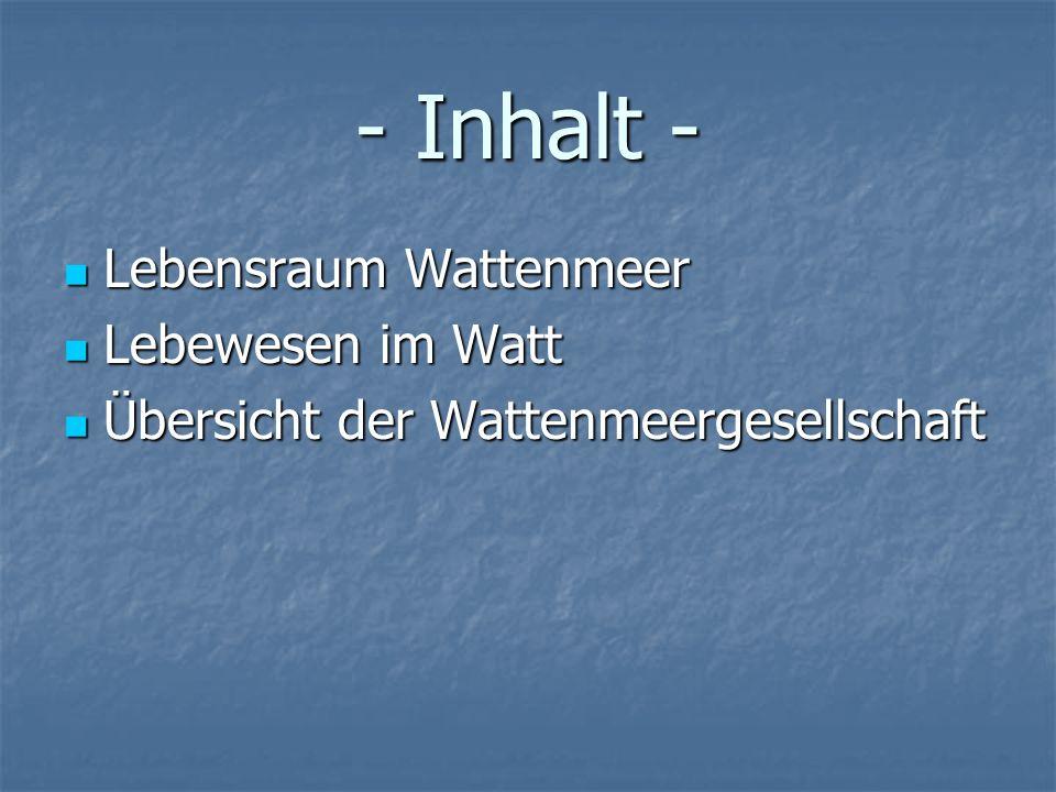 - Inhalt - Lebensraum Wattenmeer Lebensraum Wattenmeer Lebewesen im Watt Lebewesen im Watt Übersicht der Wattenmeergesellschaft Übersicht der Wattenme