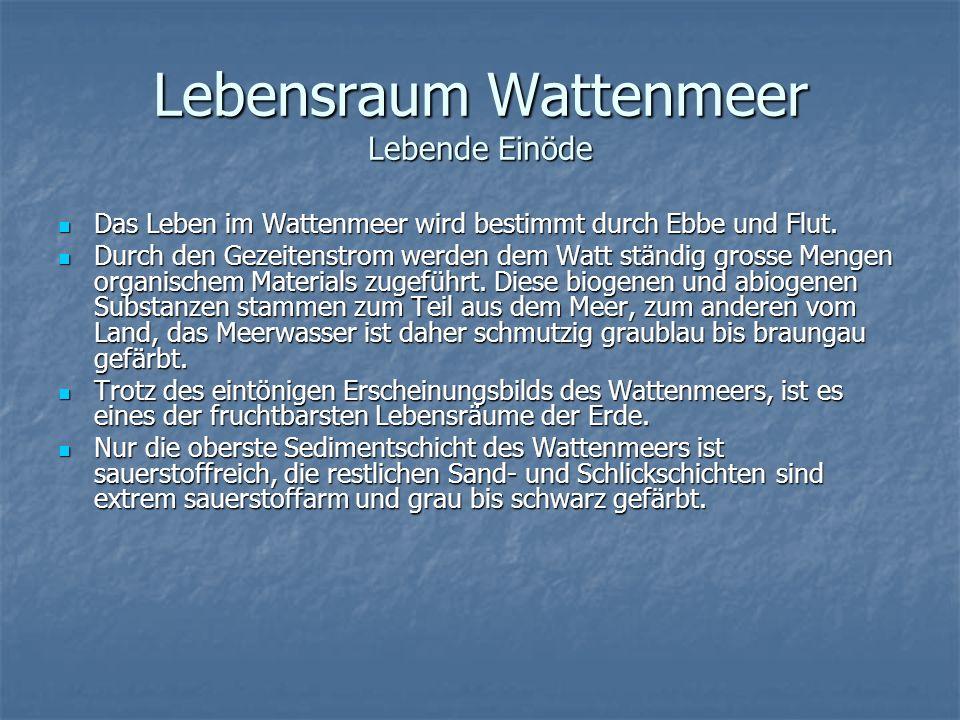 Lebensraum Wattenmeer Lebende Einöde Das Leben im Wattenmeer wird bestimmt durch Ebbe und Flut. Das Leben im Wattenmeer wird bestimmt durch Ebbe und F