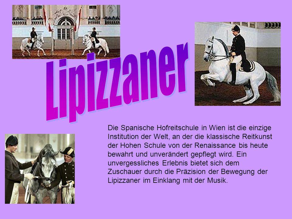 Die Spanische Hofreitschule in Wien ist die einzige Institution der Welt, an der die klassische Reitkunst der Hohen Schule von der Renaissance bis heute bewahrt und unverändert gepflegt wird.