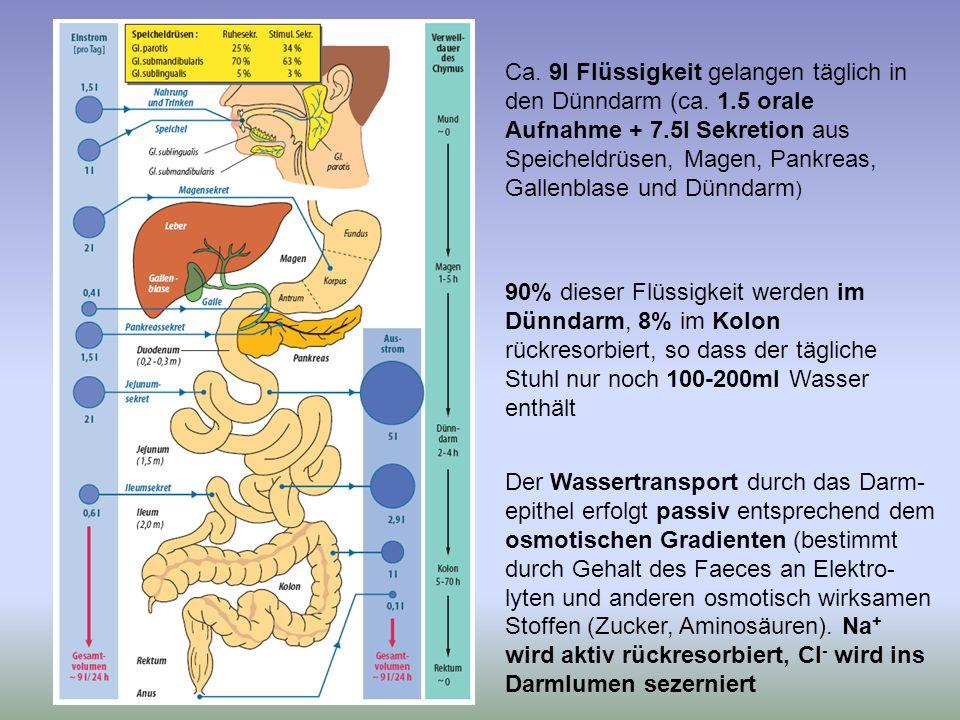 Ca. 9l Flüssigkeit gelangen täglich in den Dünndarm (ca. 1.5 orale Aufnahme + 7.5l Sekretion aus Speicheldrüsen, Magen, Pankreas, Gallenblase und Dünn