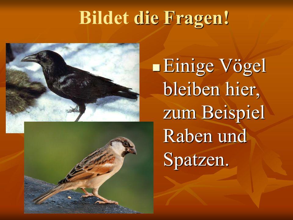 Einige Vögel bleiben hier, zum Beispiel Raben und Spatzen. Einige Vögel bleiben hier, zum Beispiel Raben und Spatzen. die Fragen! Bildet die Fragen!
