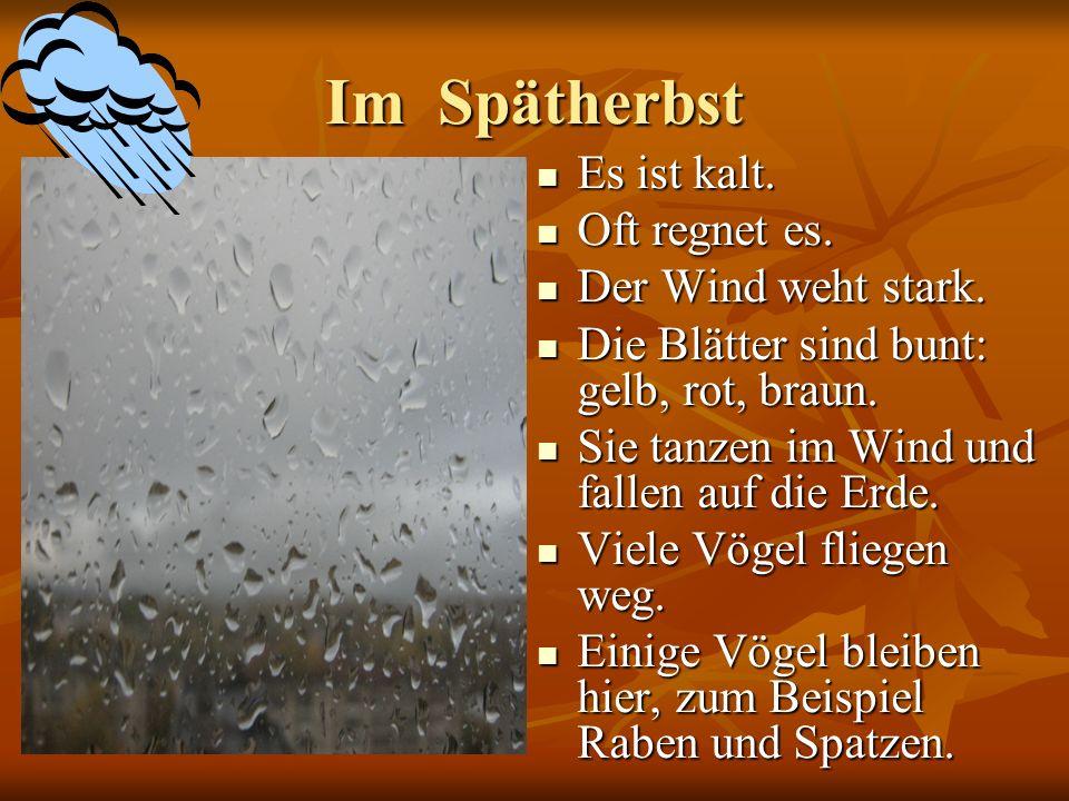 Im Spätherbst Es ist kalt. Es ist kalt. Oft regnet es. Oft regnet es. Der Wind weht stark. Der Wind weht stark. Die Blätter sind bunt: gelb, rot, brau