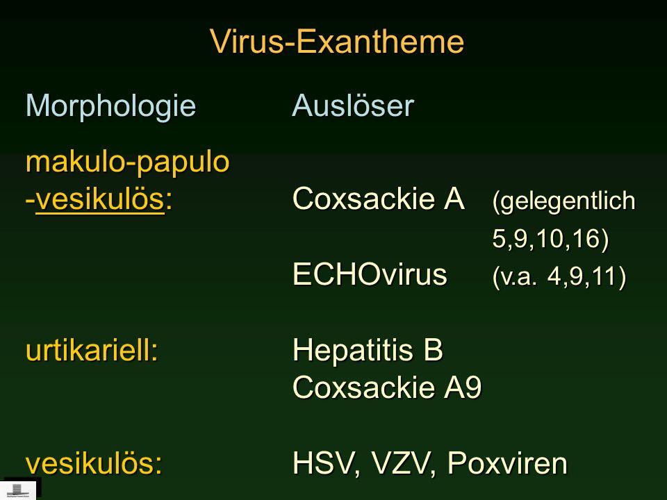 Virus-Exantheme MorphologieAuslöser makulo-papulo -vesikulös: Coxsackie A (gelegentlich 5,9,10,16) ECHOvirus (v.a. 4,9,11) urtikariell:Hepatitis B Cox