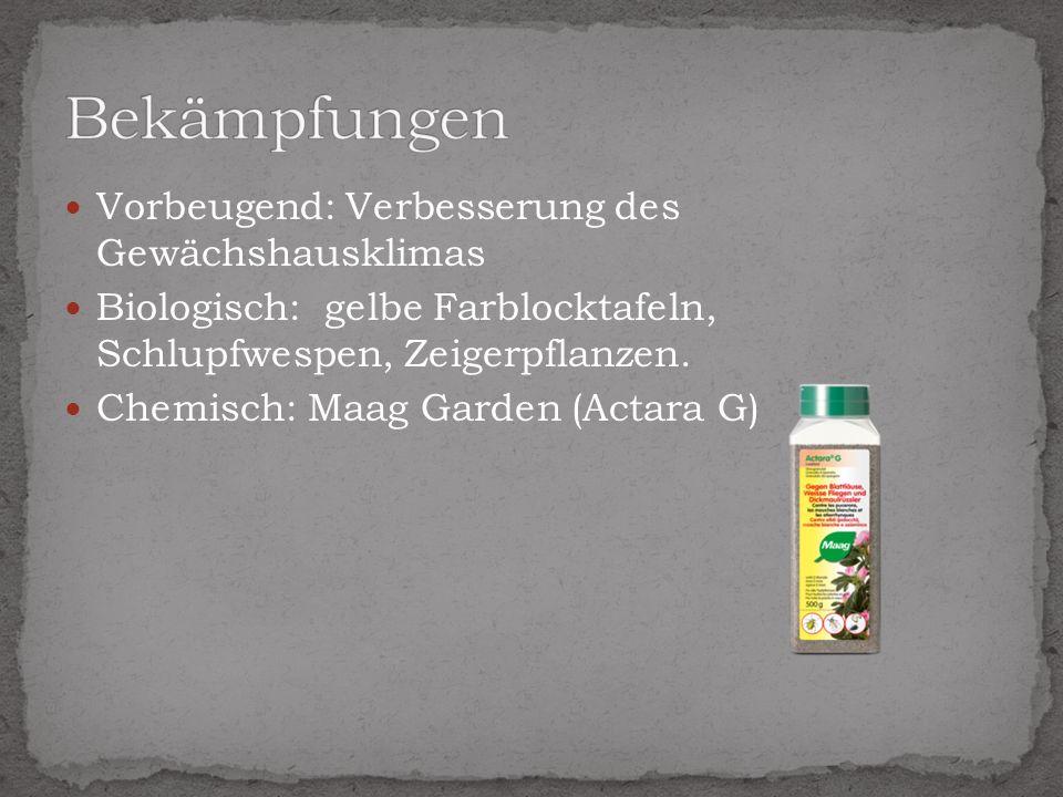 Vorbeugend: Verbesserung des Gewächshausklimas Biologisch: gelbe Farblocktafeln, Schlupfwespen, Zeigerpflanzen. Chemisch: Maag Garden (Actara G)