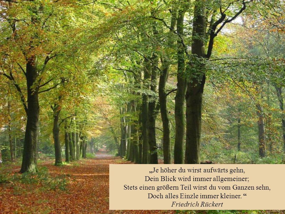 Der Neid ist die aufrichtigste Form der Anerkennung. Wilhelm Busch